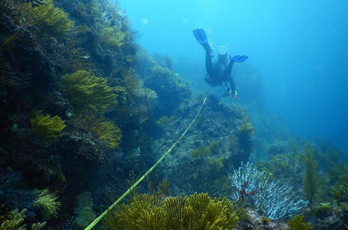 Arrecife rocoso